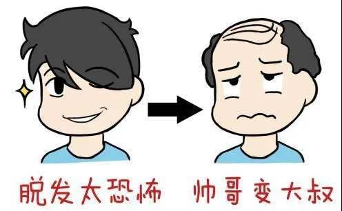 为什么秃顶的都