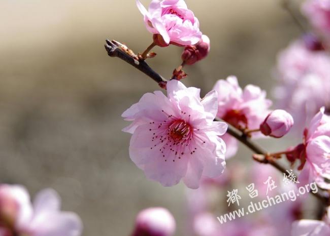 十唱花香(上)